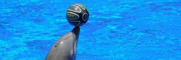 Schiffbruch mit Delfin