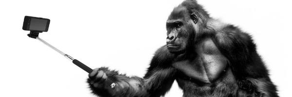 Warum wir die Gorillas nicht sehen