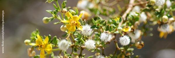 Der Kreosotbusch: Wie Erfolg zur Monokultur werden kann